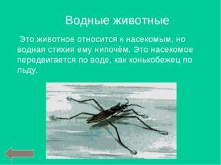Это животное относится к насекомым, но водная стихия ему нипочём. Это насеко