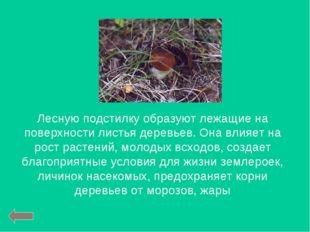 Лесную подстилку образуют лежащие на поверхности листья деревьев. Она влияет