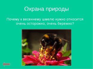 Охрана природы Почему к весеннему шмелю нужно относится очень осторожно, очен