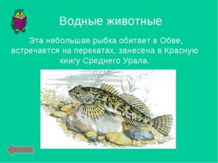 Эта небольшая рыбка обитает в Обве, встречается на перекатах, занесена в Кра