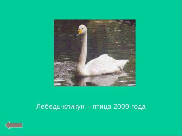 Лебедь-кликун – птица 2009 года