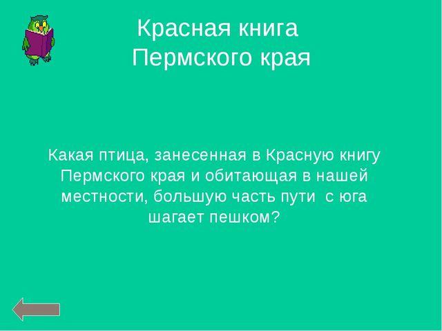 Какая птица, занесенная в Красную книгу Пермского края и обитающая в нашей ме...
