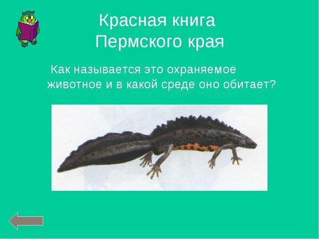 Красная книга Пермского края Как называется это охраняемое животное и в какой...
