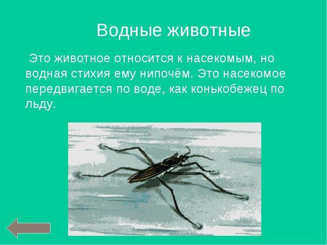 Это животное относится к насекомым, но водная стихия ему нипочём. Это насеко...