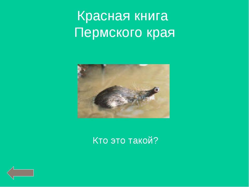 Кто это такой? Красная книга Пермского края