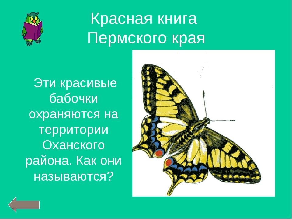 Эти красивые бабочки охраняются на территории Оханского района. Как они назы...