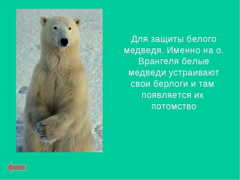 Для защиты белого медведя. Именно на о. Врангеля белые медведи устраивают сво...