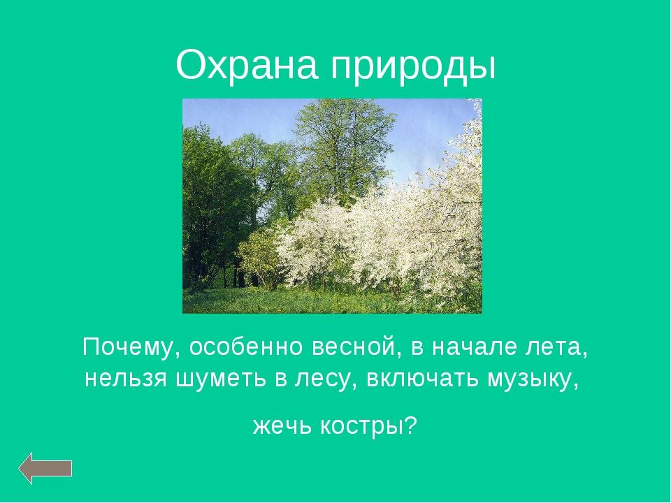 Охрана природы Почему, особенно весной, в начале лета, нельзя шуметь в лесу,...