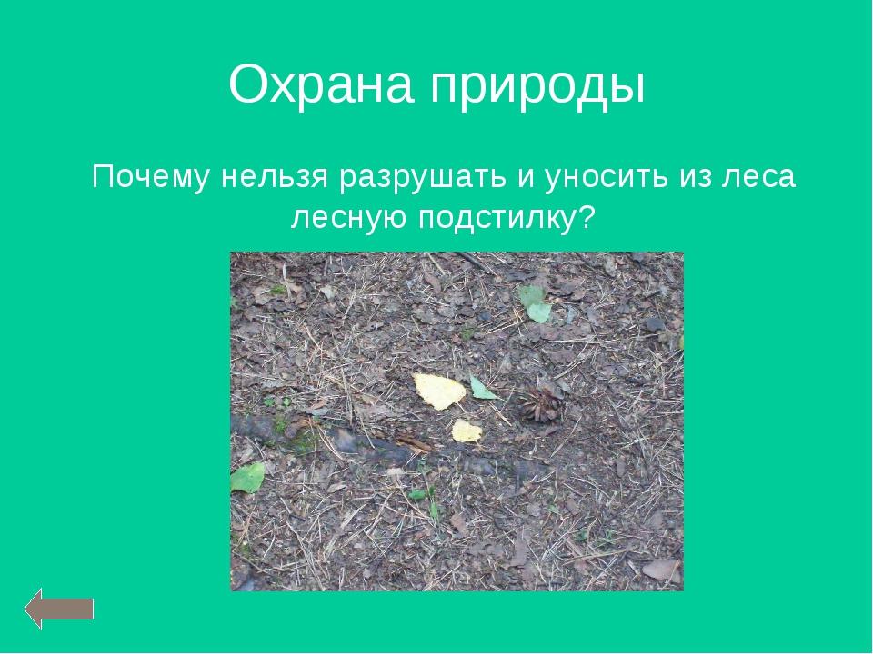 Охрана природы Почему нельзя разрушать и уносить из леса лесную подстилку?