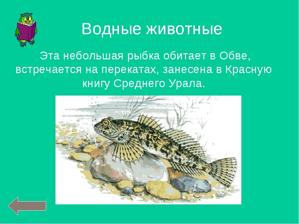 Эта небольшая рыбка обитает в Обве, встречается на перекатах, занесена в Кра...