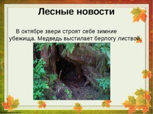 Лесные новости В октябре звери строят себе зимние убежища. Медведь выстилает