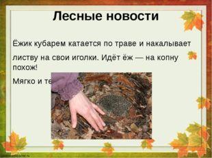 Лесные новости Ёжик кубарем катается по траве и накалывает листву на свои иго
