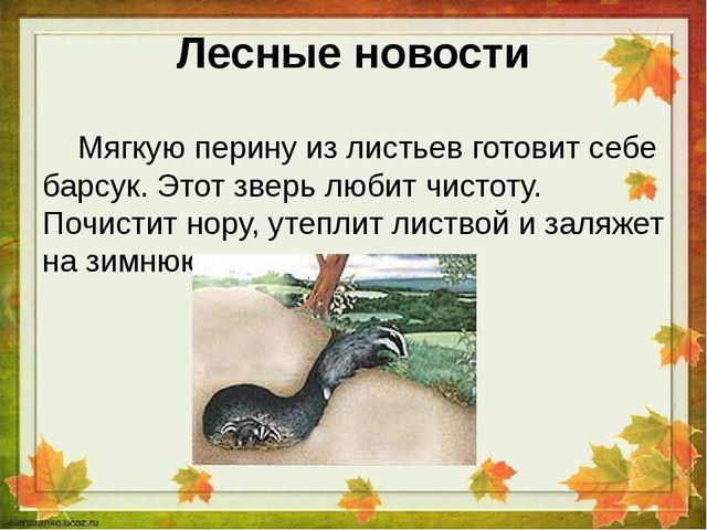 Лесные новости Мягкую перину из листьев готовит себе барсук. Этот зверь любит...