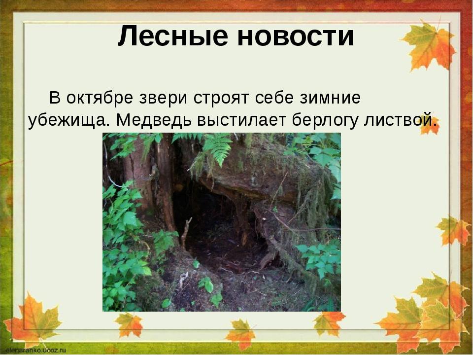 Лесные новости В октябре звери строят себе зимние убежища. Медведь выстилает...