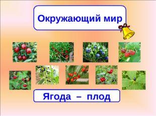 Окружающий мир Всякую ягодку в руки берут, да не всякую в кузов кладут. Ягода