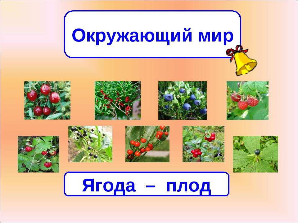 Окружающий мир Всякую ягодку в руки берут, да не всякую в кузов кладут. Ягода...