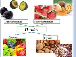 Плоды Сочные Сухие Односемянные Многосемянные