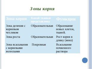 Зоны корня Зона корня Какой тканью представлена Функции Зона деления с корнев