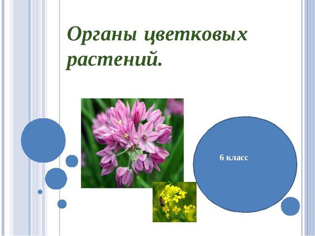 Органы цветковых растений. 6 класс