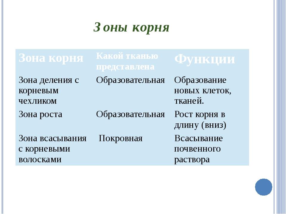 Зоны корня Зона корня Какой тканью представлена Функции Зона деления с корнев...