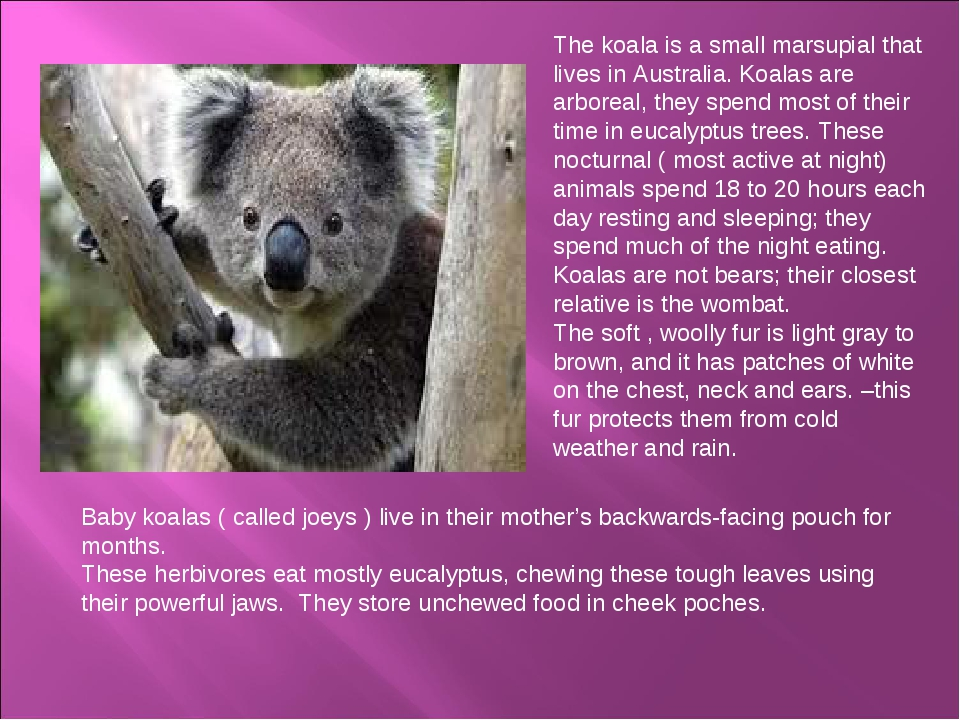The koala is a small marsupial that lives in Australia. Koalas are arboreal,...