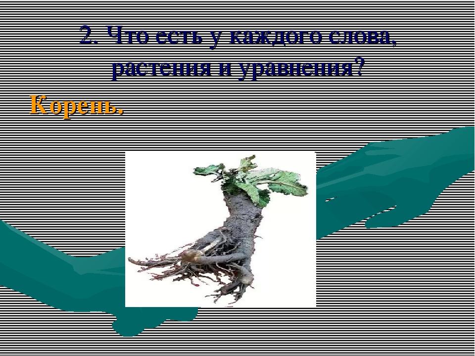 2. Что есть у каждого слова, растения и уравнения? Корень.