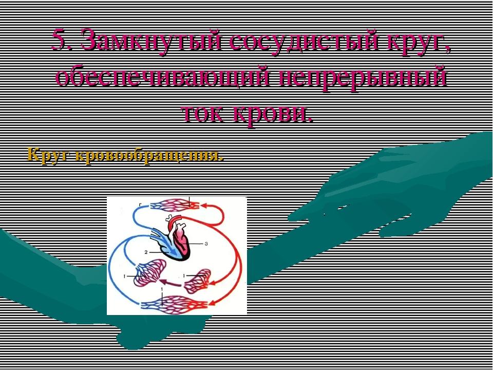 5. Замкнутый сосудистый круг, обеспечивающий непрерывный ток крови. Круг кров...