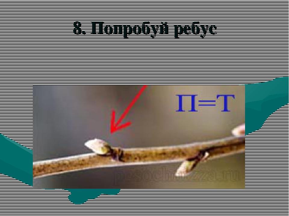 8. Попробуй ребус