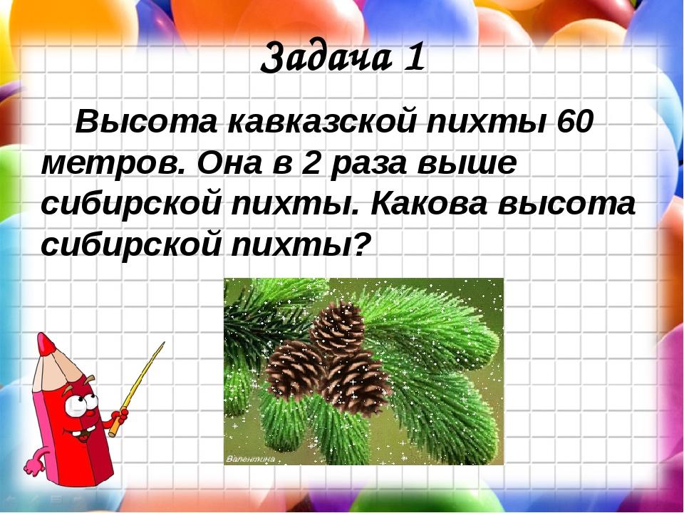 Задача 1 Высота кавказской пихты 60 метров. Она в 2 раза выше сибирской пихты...