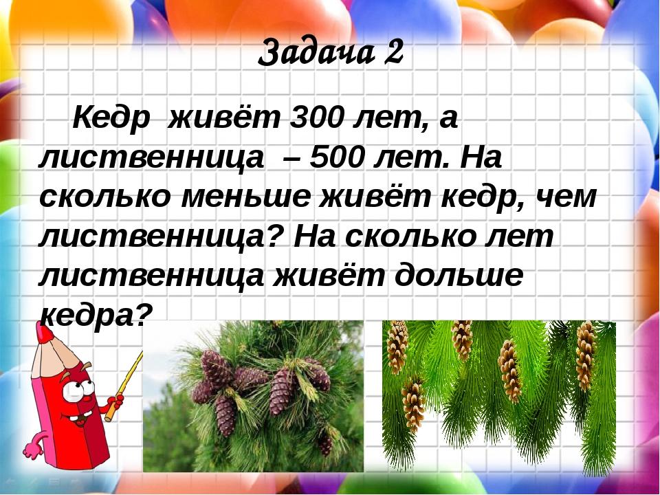 Задача 2 Кедр живёт 300 лет, а лиственница – 500 лет. На сколько меньше жив...