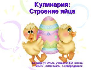 Кулинария: Строение яйца Бондарчук Ольга, учащаяся 5 А класса, МБОУ «СОШ №23»