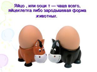 Яйцо́, или ооци́т — чаще всего, яйцеклетка либо зародышевая форма животных.