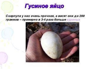 Гусиное яйцо Скорлупа у них очень прочная, а весят они до 200 граммов – приме
