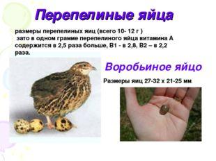 Перепелиные яйца Воробьиное яйцо размеры перепелиных яиц (всего 10- 12 г ) за