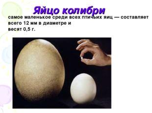 Яйцо колибри самое маленькое среди всех птичьих яиц — составляет всего 12 мм