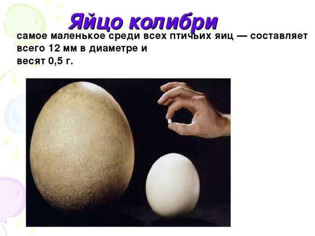 Яйцо колибри самое маленькое среди всех птичьих яиц — составляет всего 12 мм...