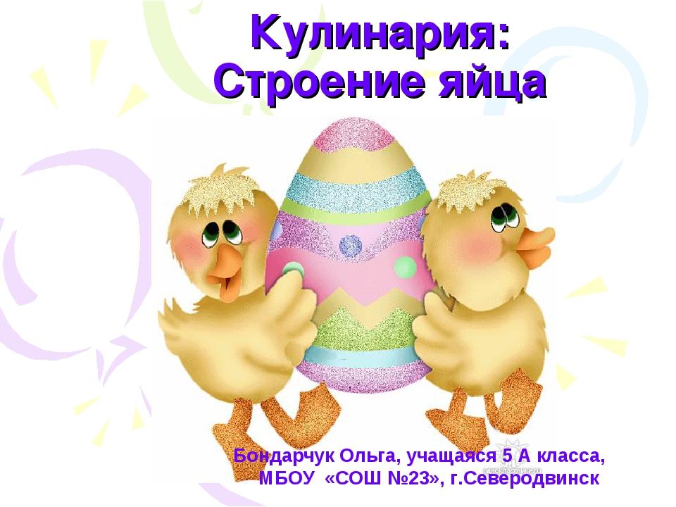 Кулинария: Строение яйца Бондарчук Ольга, учащаяся 5 А класса, МБОУ «СОШ №23»...