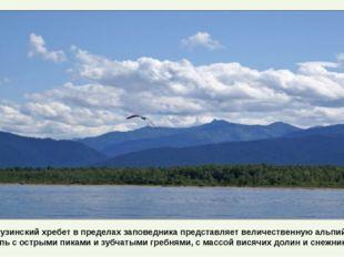 Баргузинский хребет в пределах заповедника представляет величественную альпий