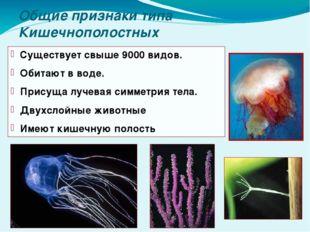 Общие признаки типа Кишечнополостных Существует свыше 9000 видов. Обитают в в