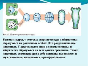 Бывают гидры, у которых сперматозоиды и яйцеклетки образуются на различных ос