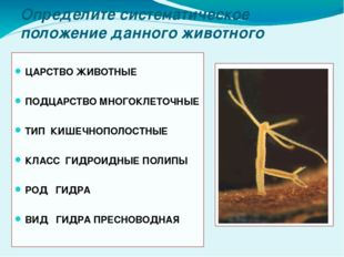 Определите систематическое положение данного животного ЦАРСТВО ЖИВОТНЫЕ ПОДЦА
