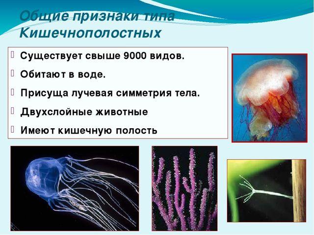 Общие признаки типа Кишечнополостных Существует свыше 9000 видов. Обитают в в...