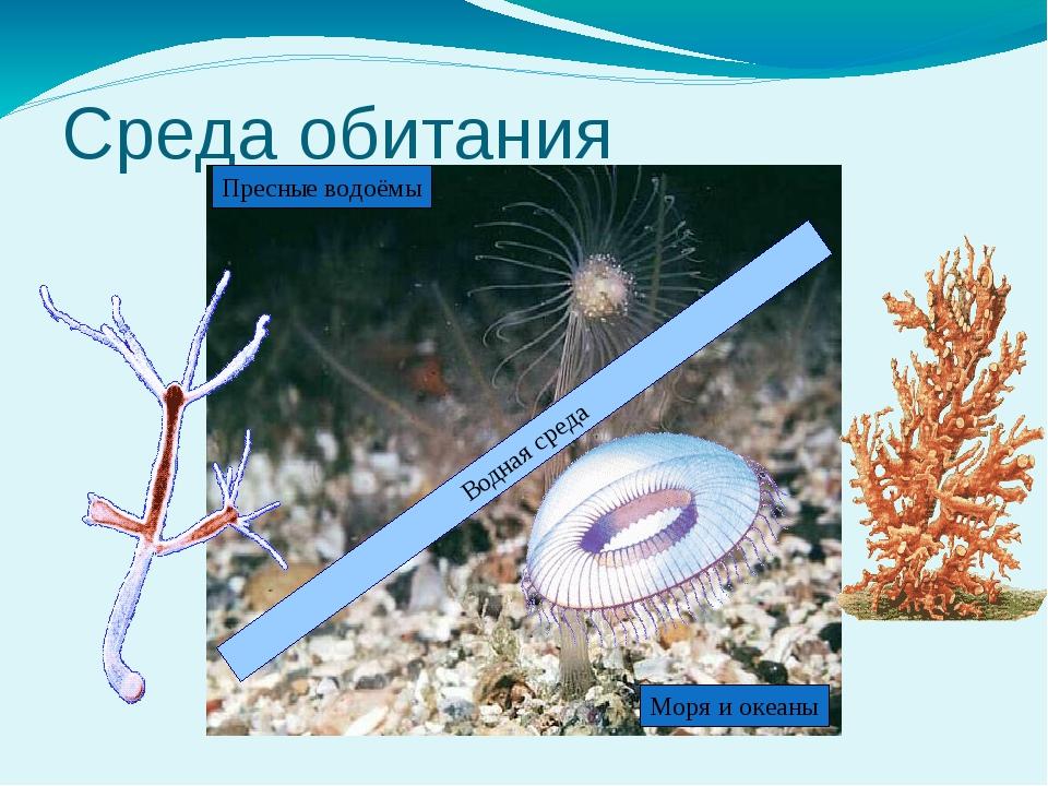 Среда обитания Водная среда Пресные водоёмы Моря и океаны Кишечнополостные –...