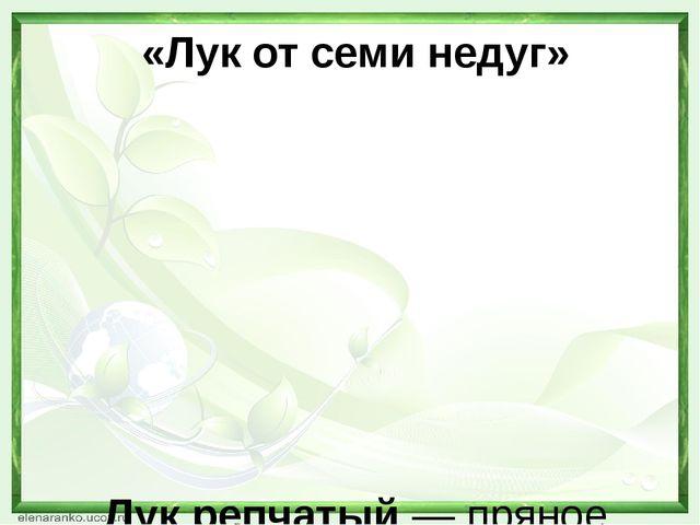 «Лук от семи недуг»   Лук репчатый— пряное культурное растение, относяще...