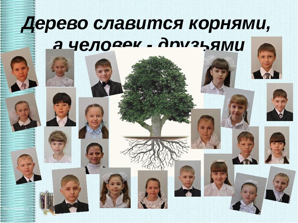 Дерево славится корнями, а человек - друзьями