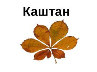 Каштан