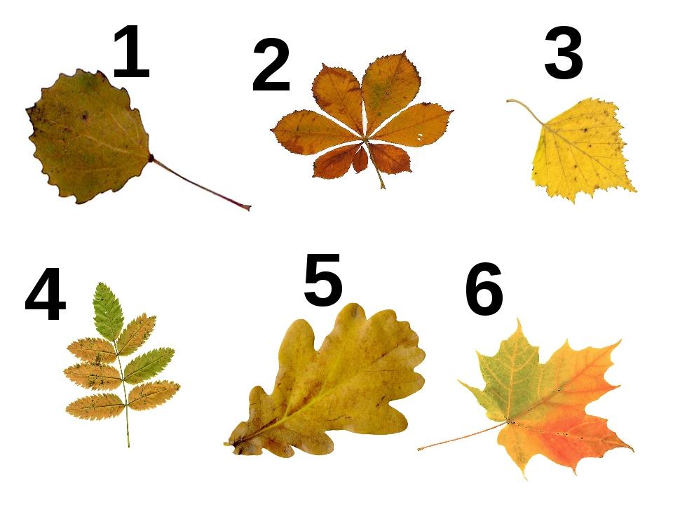 окну картинки листьев деревьев для презентации остров овеян