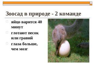 Зоосад в природе - 2 команде яйцо варится 40 минут глотают песок или гравий г