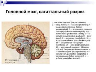 Головной мозг, сагиттальный разрез 1 —мозолистое тело (corpus callosum); 2 —