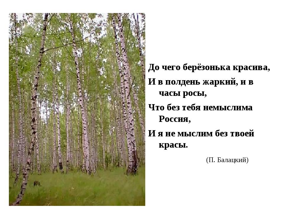 До чего берёзонька красива, И в полдень жаркий, и в часы росы, Что без тебя...